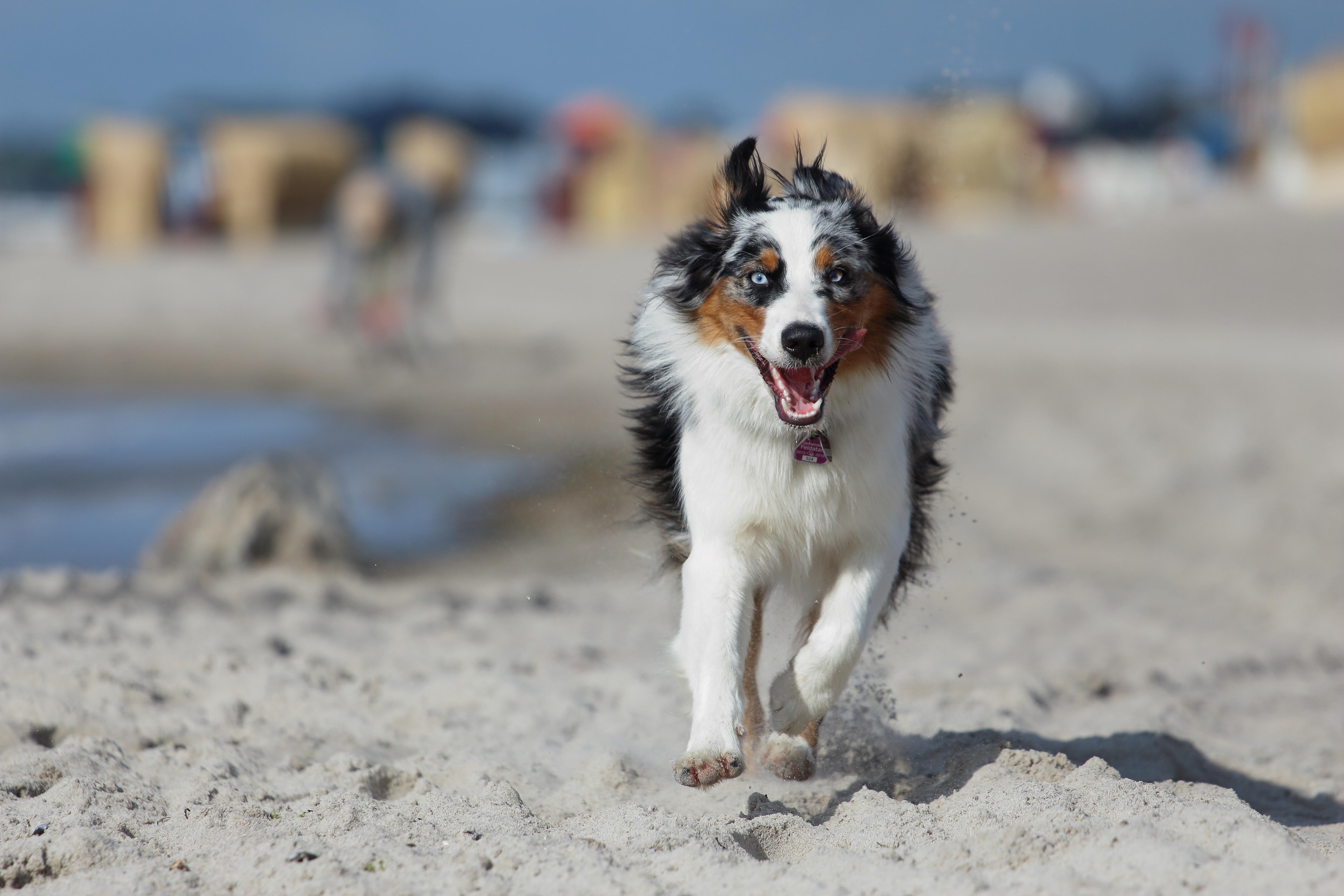 Urlaub mit Hund Beitragsbild