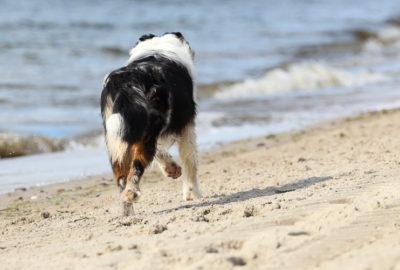 Urlaub mit Hund Titelbild