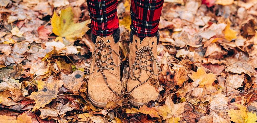 Herbstfavoriten Titelbild