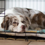 Die Vorteile einer Hundebox