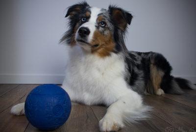 Indoor-Beschäftigungsideen [Teil 1] Futterball