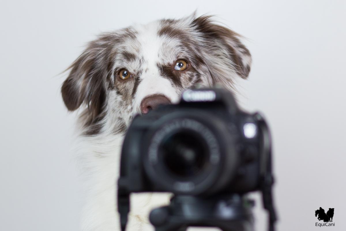 Einsteiger-Spiegelreflexkamera und Kit Objektiv