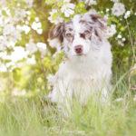 Tipps für schönere Hundefotos