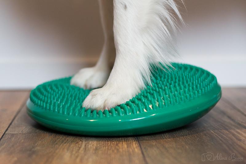 Wann ist Tierphysiotherapie sinnvoll?