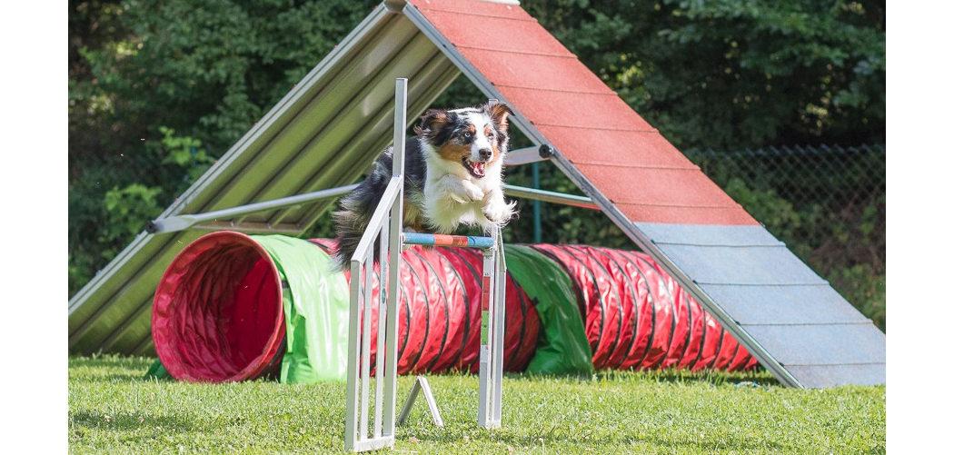 Unsere liebste Hundesportart Agility