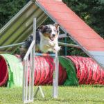 Unsere liebste Hundesportart: Agility
