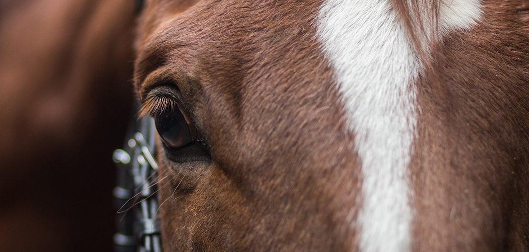 Die Ausbildungsskala - systematische Ausbildung des Pferdes