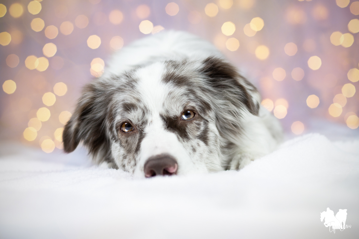 Tipps für tierisch schöne Weihnachtsfotos