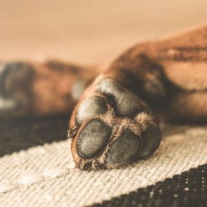 Pflegetipps für Winterpfötchen