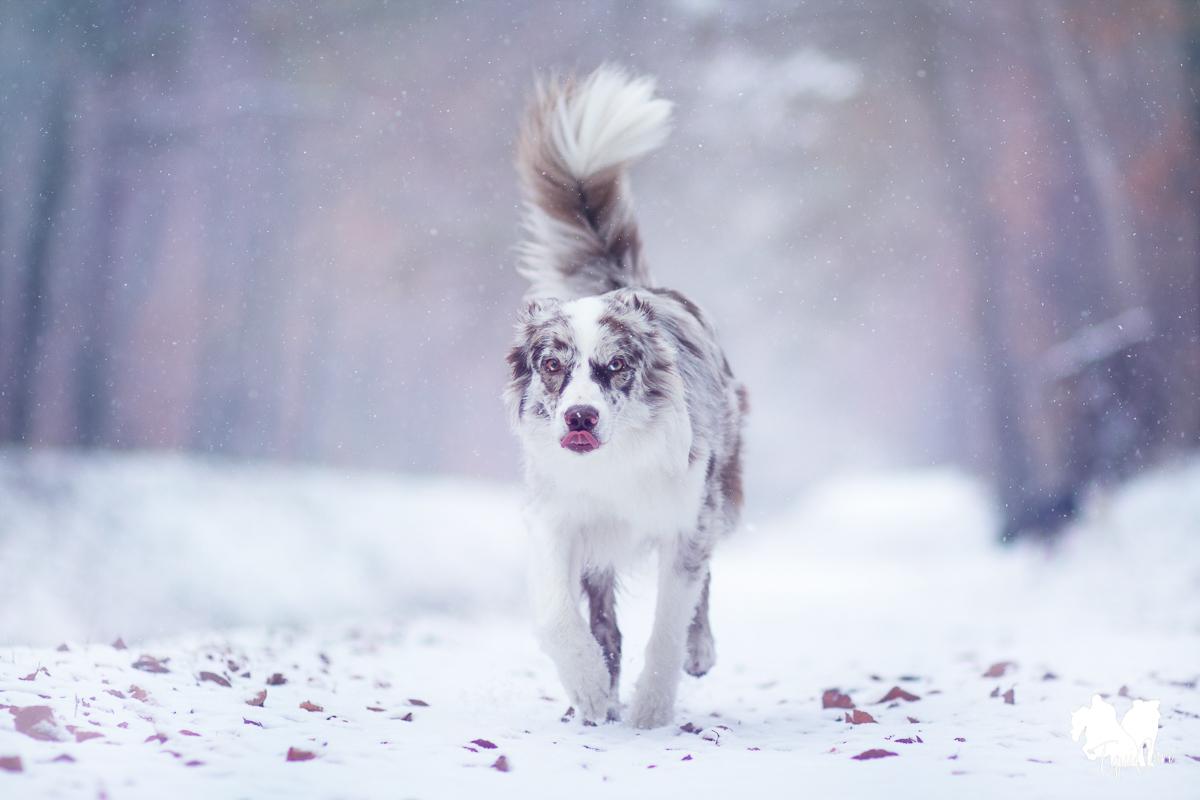 Tipps für tierisch schöne Schneefotos
