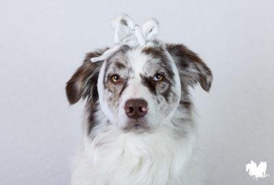 Was gehört alles in die Reiseapotheke für den Hund